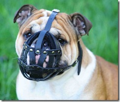 english-bulldog-dog-muzzle-leather-dog-muzzle-bulldog_LRG